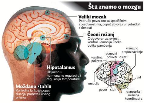 mozak8