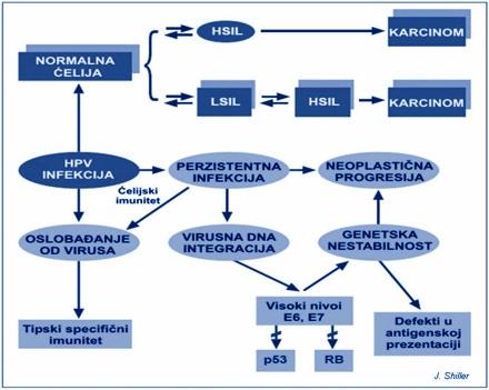 hpv karcinogeneza