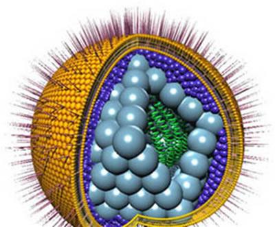 HERPES VIRUS 6