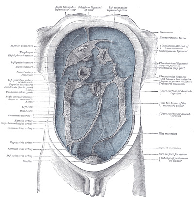 peritoneum