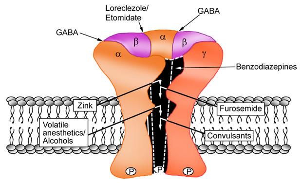 receptor GABA