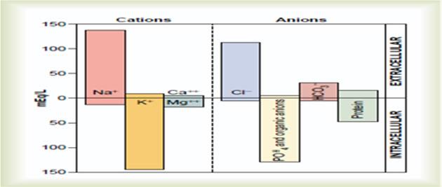 intracelularna i ektracelularna tečnost