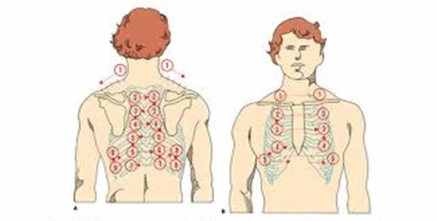 auskultacija pluca