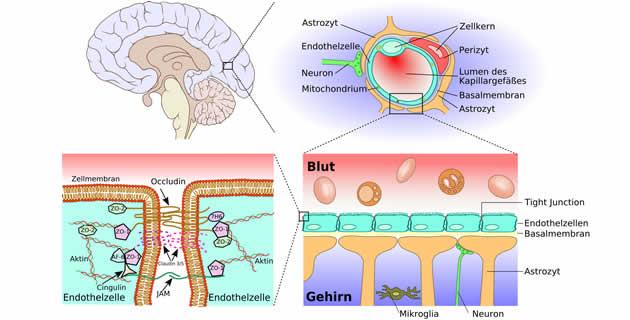 krvno-moždana barijera