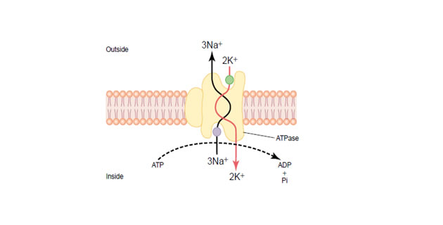 ATP-azna pumpa
