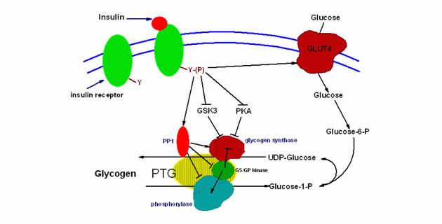 Poremećaji prometa ugljikohidrata u ćelijama