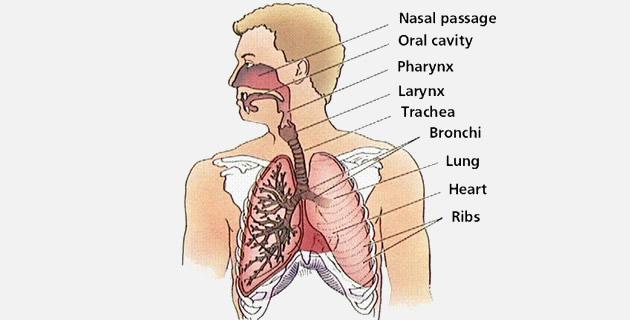 Respiratorni sistem