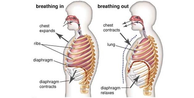 a hipertónia sémájának piócáinak szívópontjának hirudoterápiája