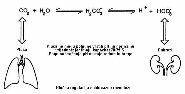 Acidobazna ravnoteža