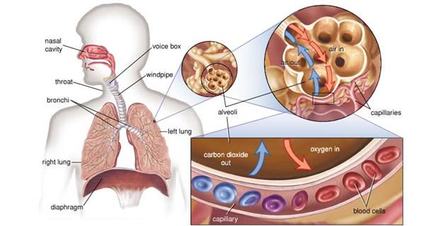 a magas vérnyomású gyógyszerekkel történő kezelési módszerek tudja hogyan a magas vérnyomásból