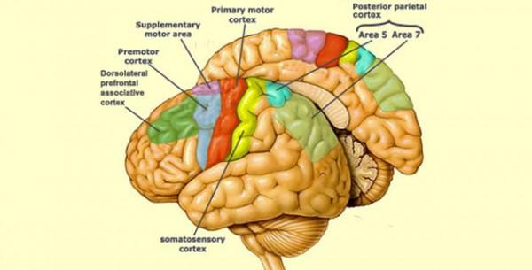 Motorna kora velikog mozga