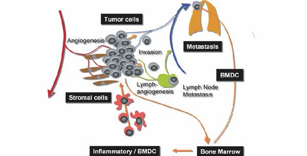 Rast i metastaziranje tumora