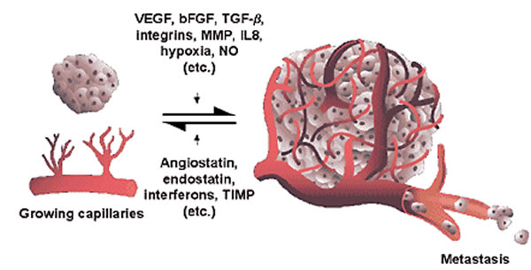 Tumorska angiogeneza