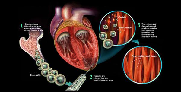 Matične stanice
