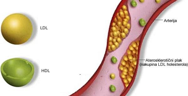 HDL holesterol