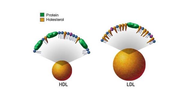 Određivanje nivoa holesterola