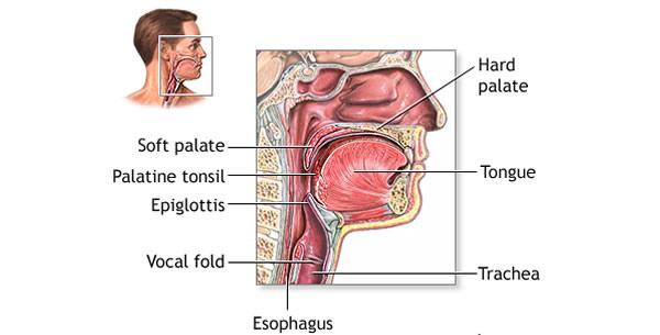 Anatomija ždrijela